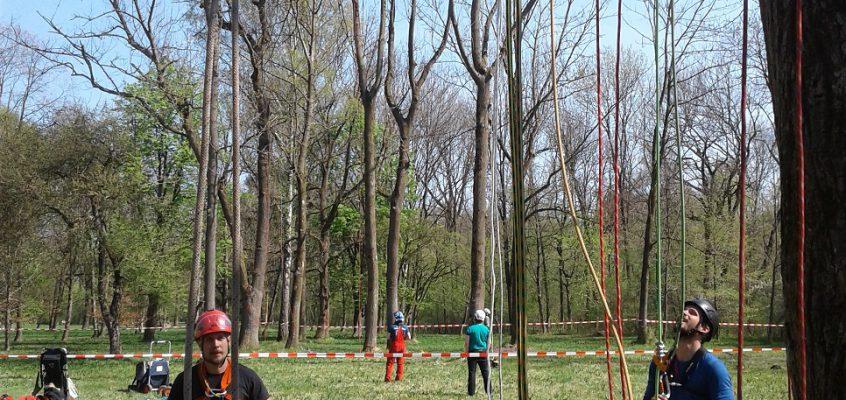 SKT-B Kurs von der Baumkletterschule München